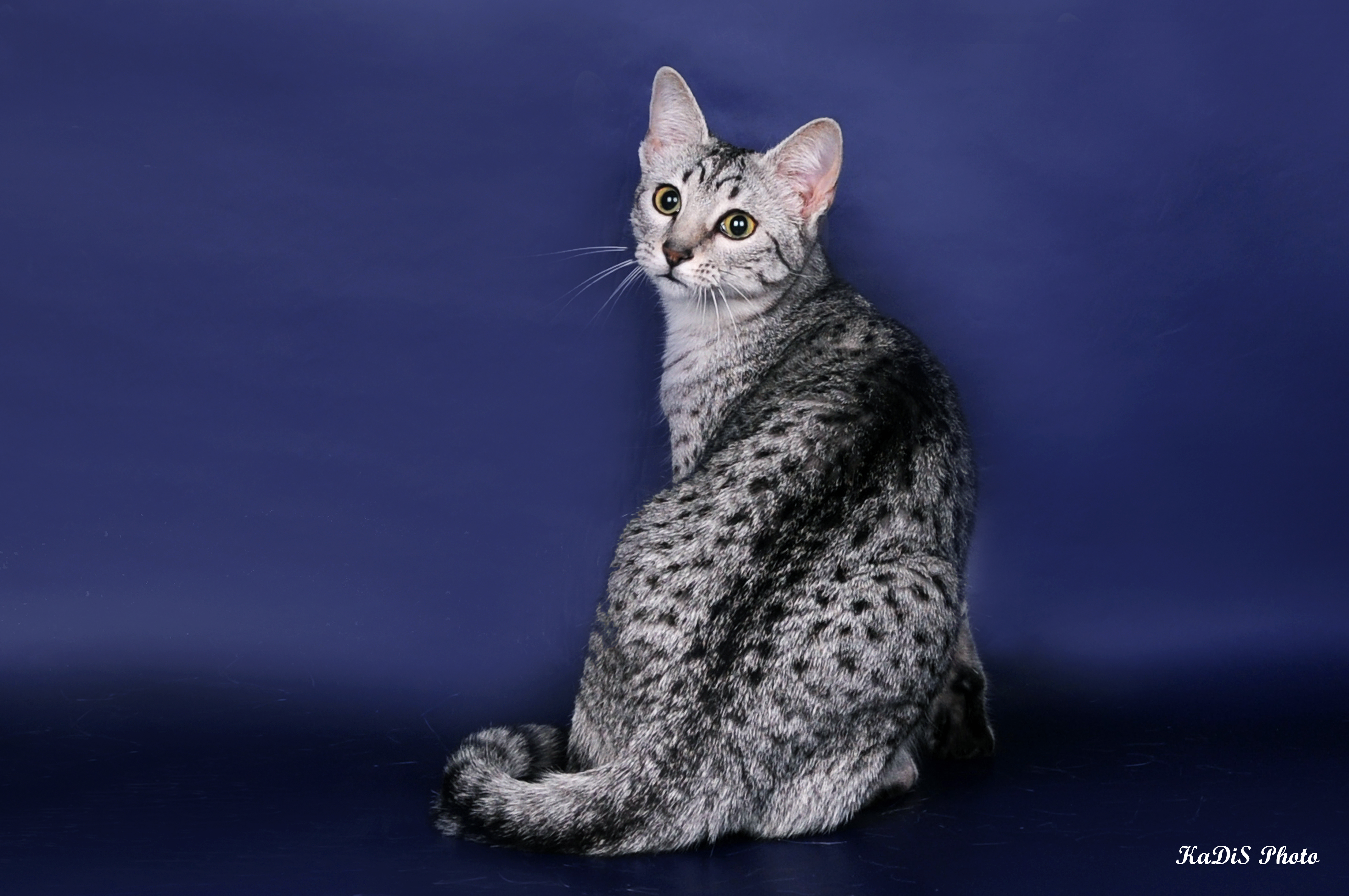 Кошка сидит фото